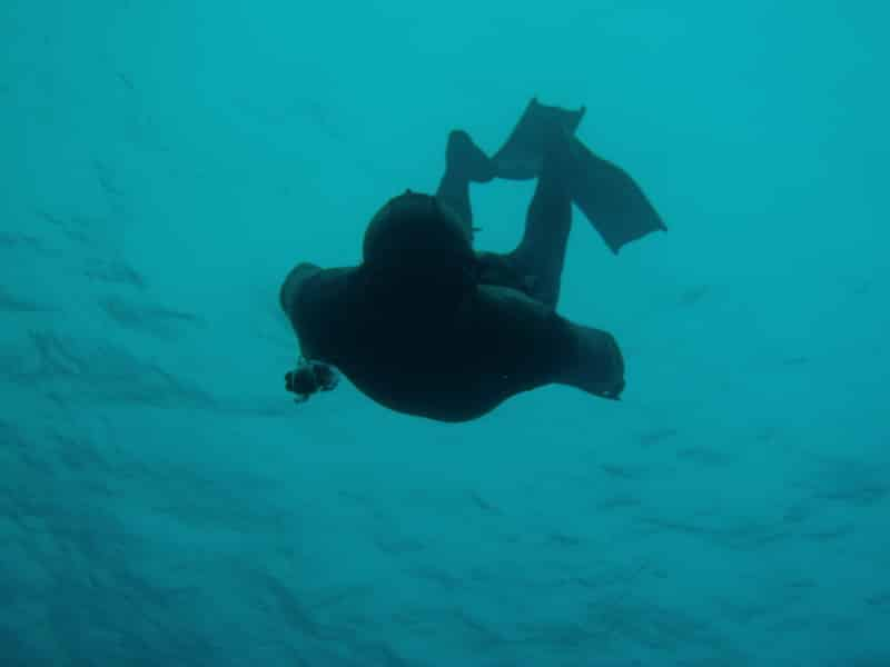 Freediving and Sailing Cruises